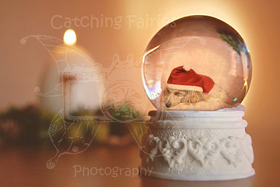 Template digital scene Christmas Lights / by CatchingFairies, €6.95