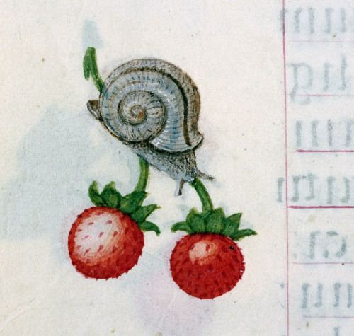 snail and strawberries book of hours, Bruges ca. 1510-1525 Rouen, bibliothèque municipale, ms. 3028, fol. 58v