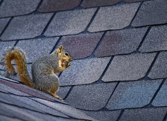 10 Fast Fixes For Annoying House Noises Get Rid Of Squirrels Pest Control Squirrel