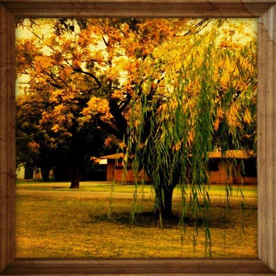 my front yard in the fall ;)