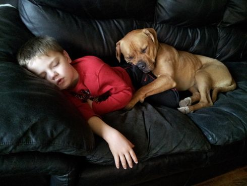 Parents are happy that their kids have the opportunity to have a dogs. children and dogs are the best of friends, as close as siblings and love each other.: