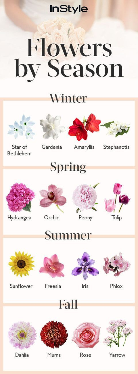 Wedding flowers most popular and stems on pinterest - Flowers that bloom from spring to fall ...