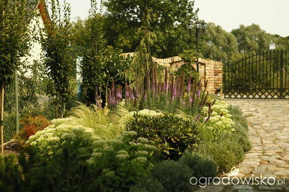 Grembosiowo - strona 283 - Forum ogrodnicze - Ogrodowisko