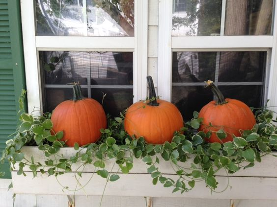 Pumpkins and ivy in a window box. Easy fall decor!