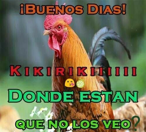 Buenos Dias Good Morning Memes Imagine