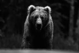 #cute #wildlife #travel #animals #ideas #inspiration