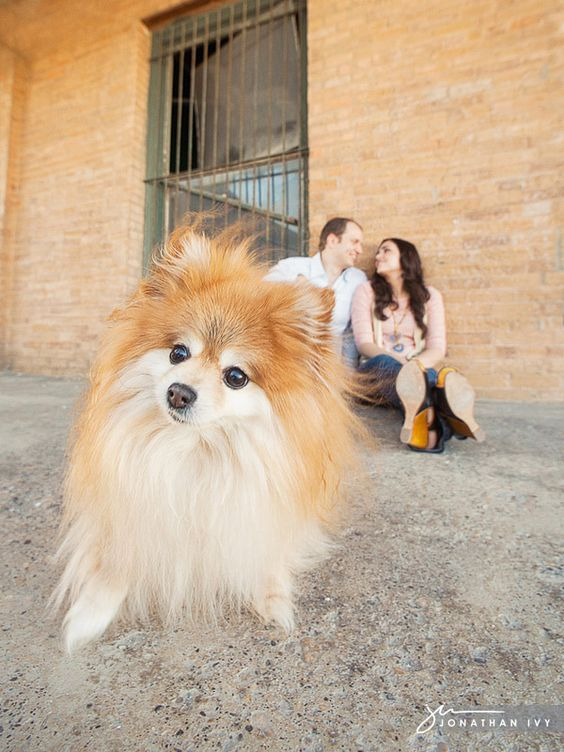 Engagement Photo with a dog  www.jonathanivyphoto.com