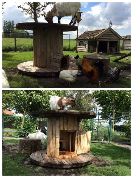 Kippen en geiten hok