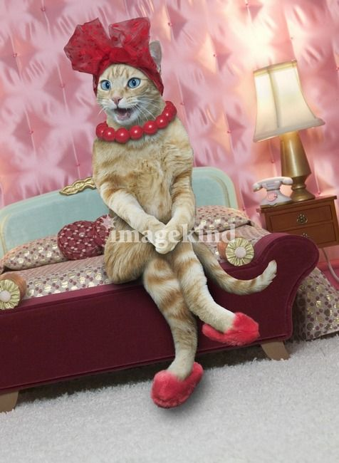 Sexy Cat by John Lund