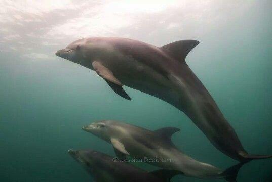 Polperro Dolphin Swim