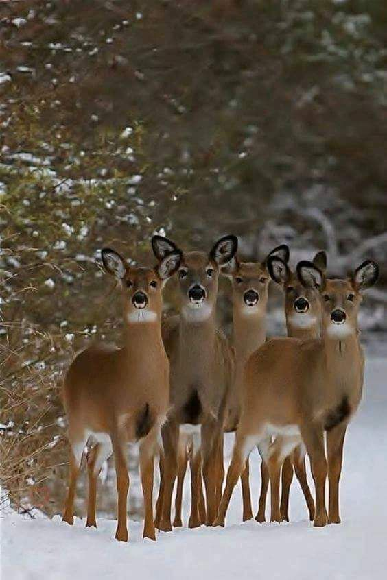 A Group Of Female Deer Animals Nature Animals Cute Animals