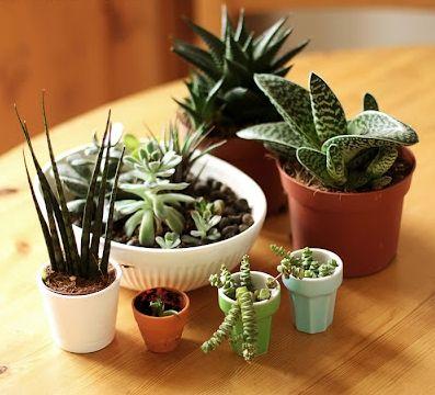 Mini jardim com plantinhas suculentas