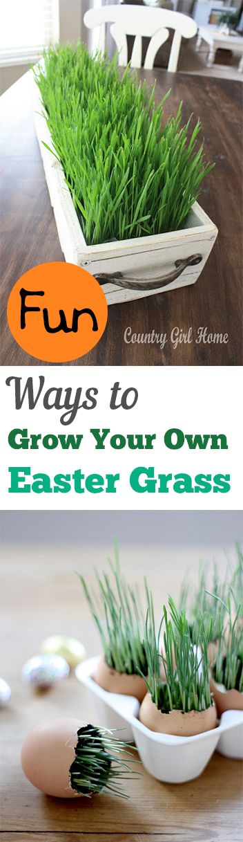Fun Ways to Grow Your Own Easter Grass. Fun ideas, tips and tutorials: