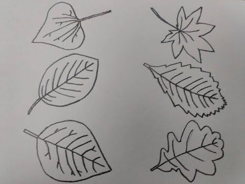رسم رسم ورق شجر بالرصاص بسهولة اكتر من 5 انواع Youtube Geometric Tattoo Geometric Drawings