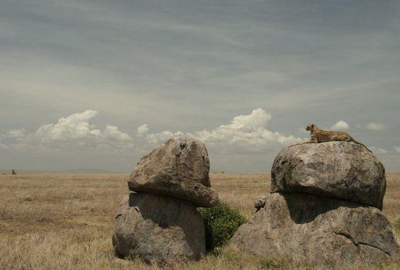 Imagen de http://www.astepahead.es/wp-content/uploads/2008/03/magee2008j-edited-271.jpg.