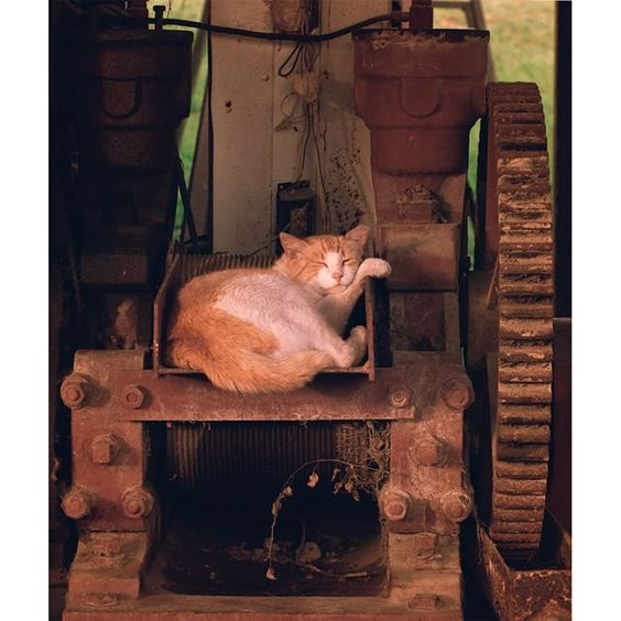 Driving the back roads of rural southern Louisiana, we stopped at a general store and found several cats had made it their home. This handsome fellow was taking a nap on some equipment in an open shop, keeping one eye on me. // Available in the shop - lin