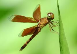 insect photos - Google Search