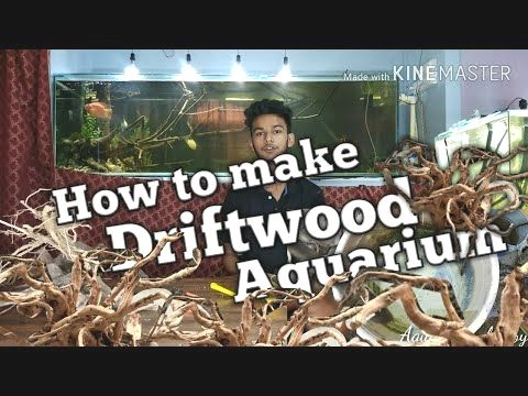 42b22d14848eb462aab0d8706f7c2209 - How To Get Driftwood To Sink In Fish Tank