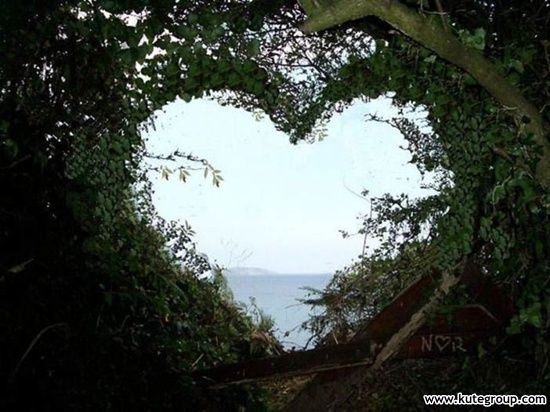 Love is every where