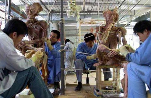 屍體加工的恐怖流程,以及薄熙來及其妻薄谷開來牽扯其中的黑幕。