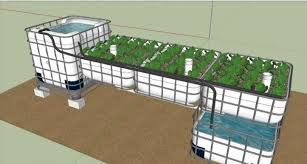 aquaponics ibc - Google Search: