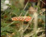 Er zijn heel veel verschillende soorten paddenstoelen. In dit filmpje gaan kinderen in het bos op zoek naar verschillende soorten paddenstoelen.
