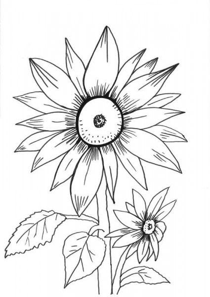 Girasoles Dibujo Para Colorear E Imprimir En 2020 Girasoles Dibujo Flores Faciles De Dibujar Paginas Para Colorear De Flores