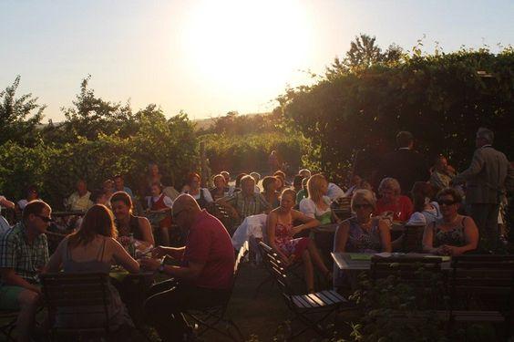 Idyllische Stimmung inmitten der Weingärten bei der LOISIUM WeinErlebnisWelt. Fotocredit: LOISIUM WeinErlebnisWelt