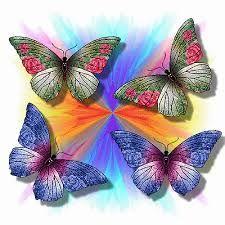 Resultado de imagem para imagens de borboletas