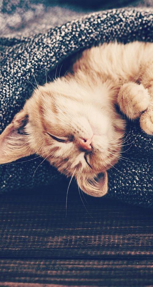 Kartinka Najdeno Polzovatelem Saraa Garbani Nahodite I Sohranyajte Svoi Sobstvennye Izobrazheniya I Video Kitten Wallpaper Cute Cat Wallpaper Kittens Cutest