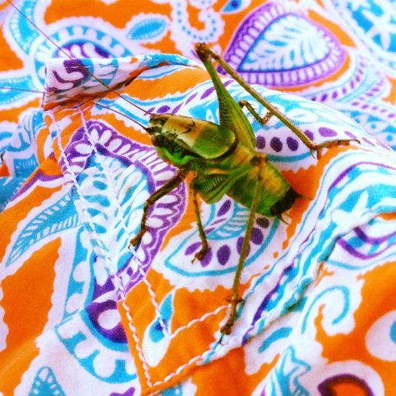 Grasshopper in Greek island.