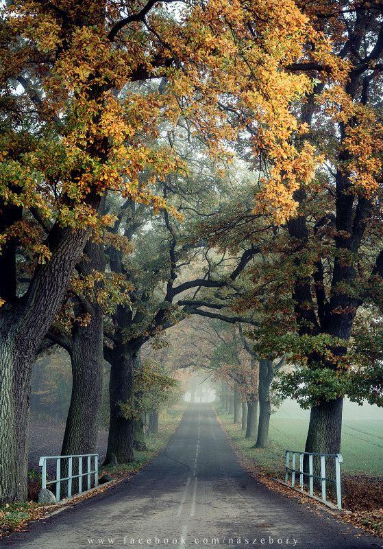 Autumn in Czartołomie near Jarcewo, Bory Tucholskie, Poland: