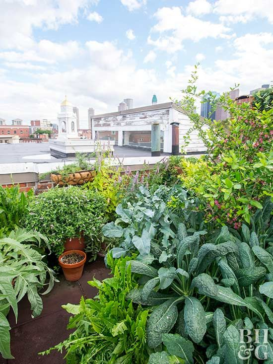 Balcony And Rooftop Gardening Arely Fun