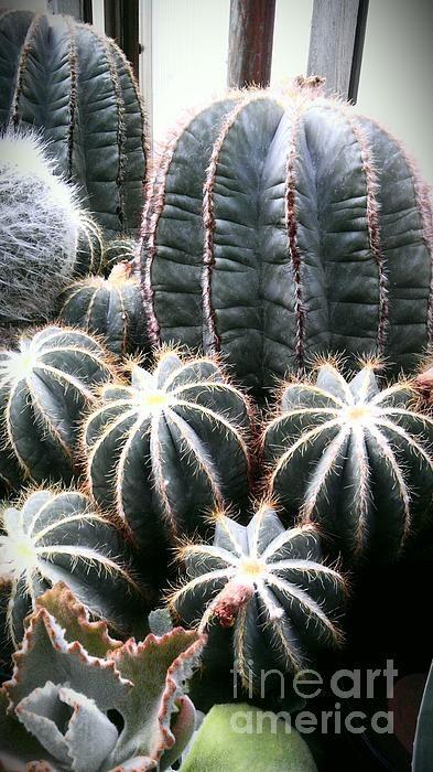 Cactus glistening in the sun