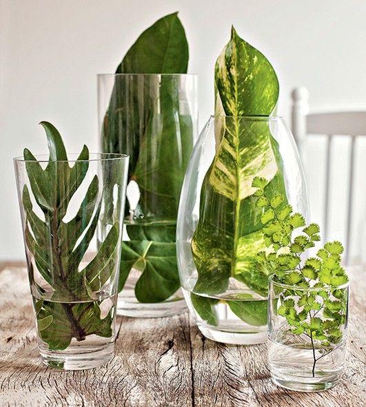 Folhas verdes e vasos ou copos transparentes, não tem como errar: com espécies de formatos diferentes (como xanadu, antúrio e avenca), em recipientes de tamanhos variados, você faz num instante um arranjo original e tão simples quanto chique. É frescor na medida certa