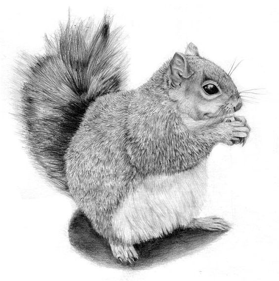 The Victorious Squirell-Graphite Animal Drawing-Archival ...