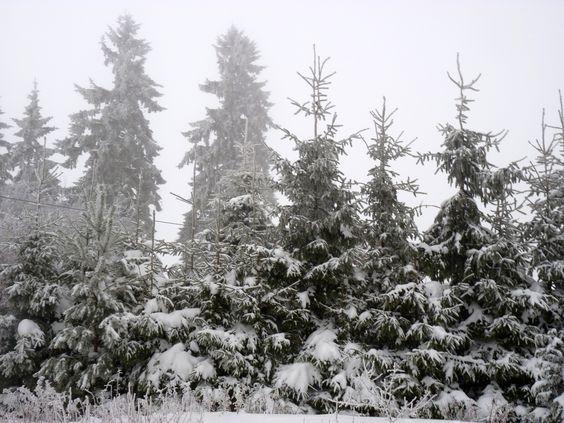 #Baumspitzen voll Schnee im #Winter