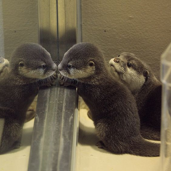 Mirror mirror on the wall, who's the cutest otter of all?
