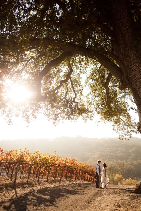 Rustic & Vintage Fall Wedding at HammerSky Vineyards. A fall vineyard…