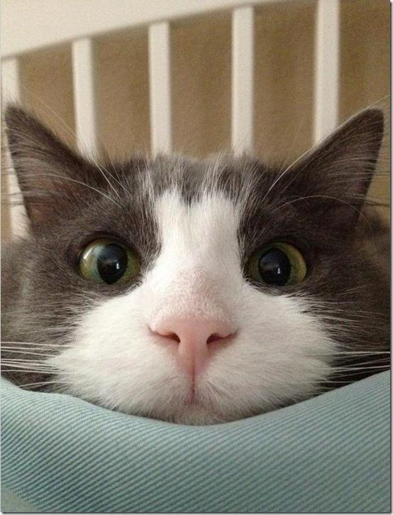 #Pinterest Cute Cats!  http://www.pinterestpatron.com/2012/08/pinterest-cats/