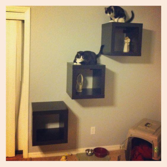 Cat Wall From Ikea Shelves Cat Trees Cat Walks Cat