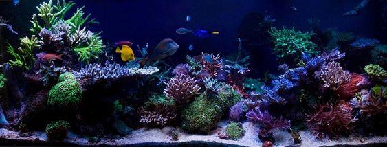 Scott Swanson's (swannyson7) 180 US-gallon Reef Aquarium