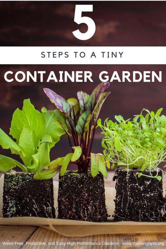Start out small with these 5 steps to a 5 minute EASY garden on your patio, porch, driveway, or rooftop!