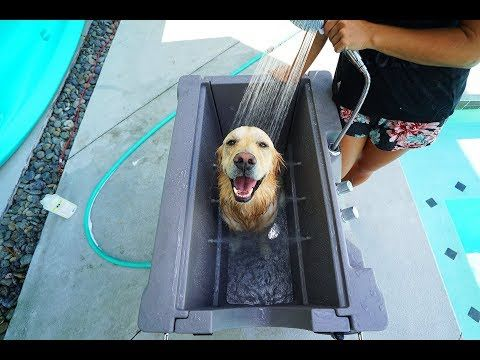 Puppy Loves His New Custom Dog Bath Super Cooper Sunday 157