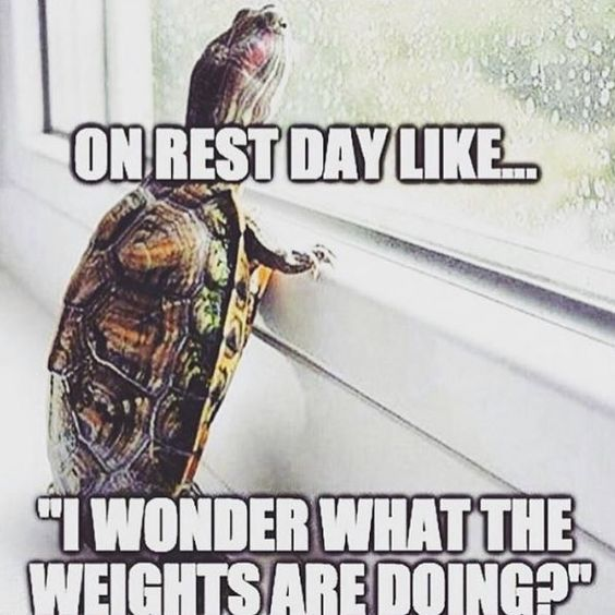 Don't miss me too much Gym, I'll be back in 1 day!: