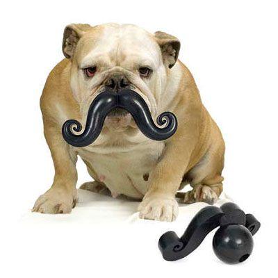 Moustache for your bulldog.  Humunga Stache Chew Toy