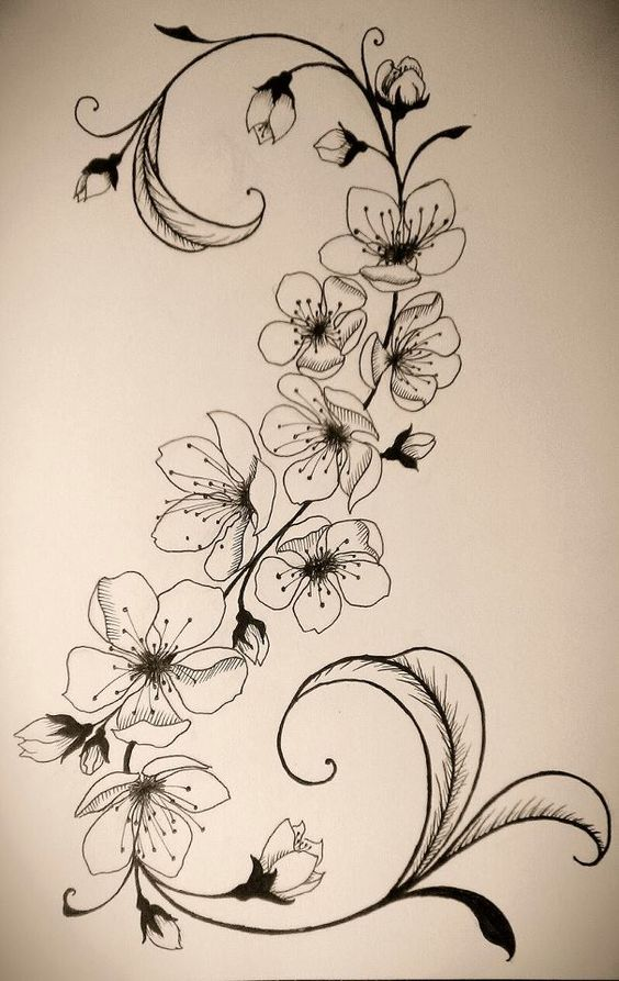 Cerisier Bois De Chauffage : Cherry Blossom Tattoo Drawings