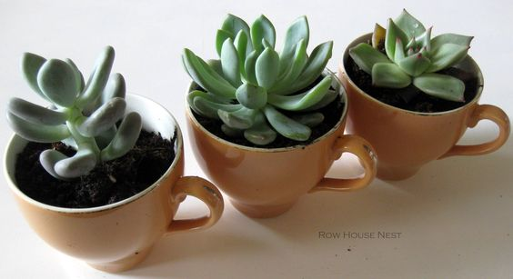 succulents in tea cups! I thought that was my idea!