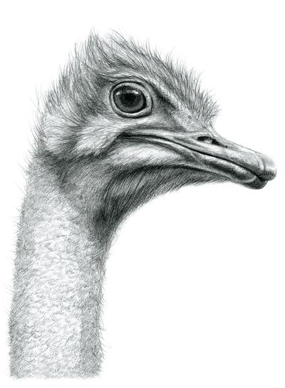 Funny Ostrich SK061 Art Print by S-Shukina