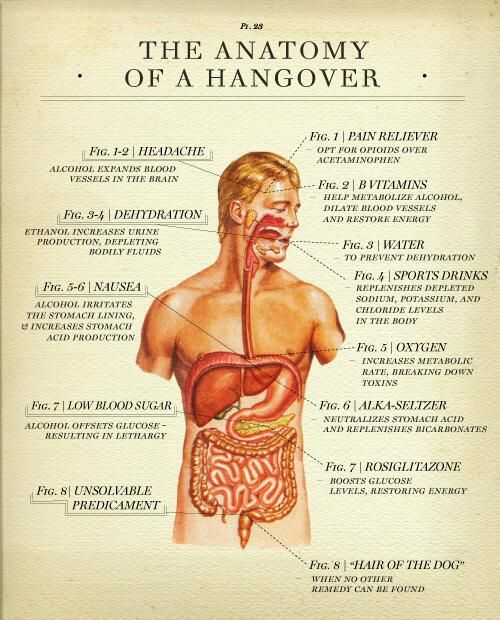The Anatomy of a hangover - infographic